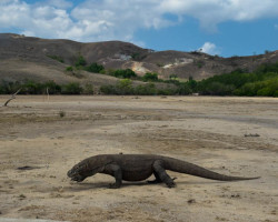 Win a FREE Trip to Komodo Island National Park