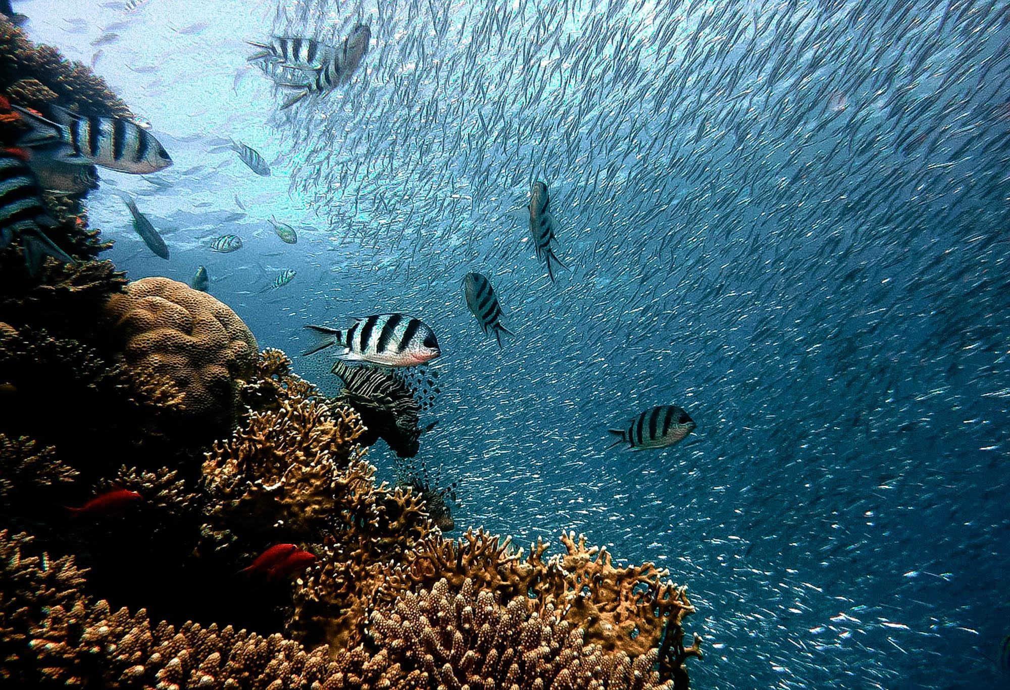 sardine-run-3-1-of-1