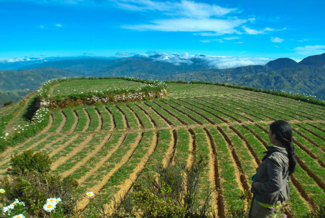 Timbac is hemmed in by mountains transformed into vegetables and flower terraces by the locals