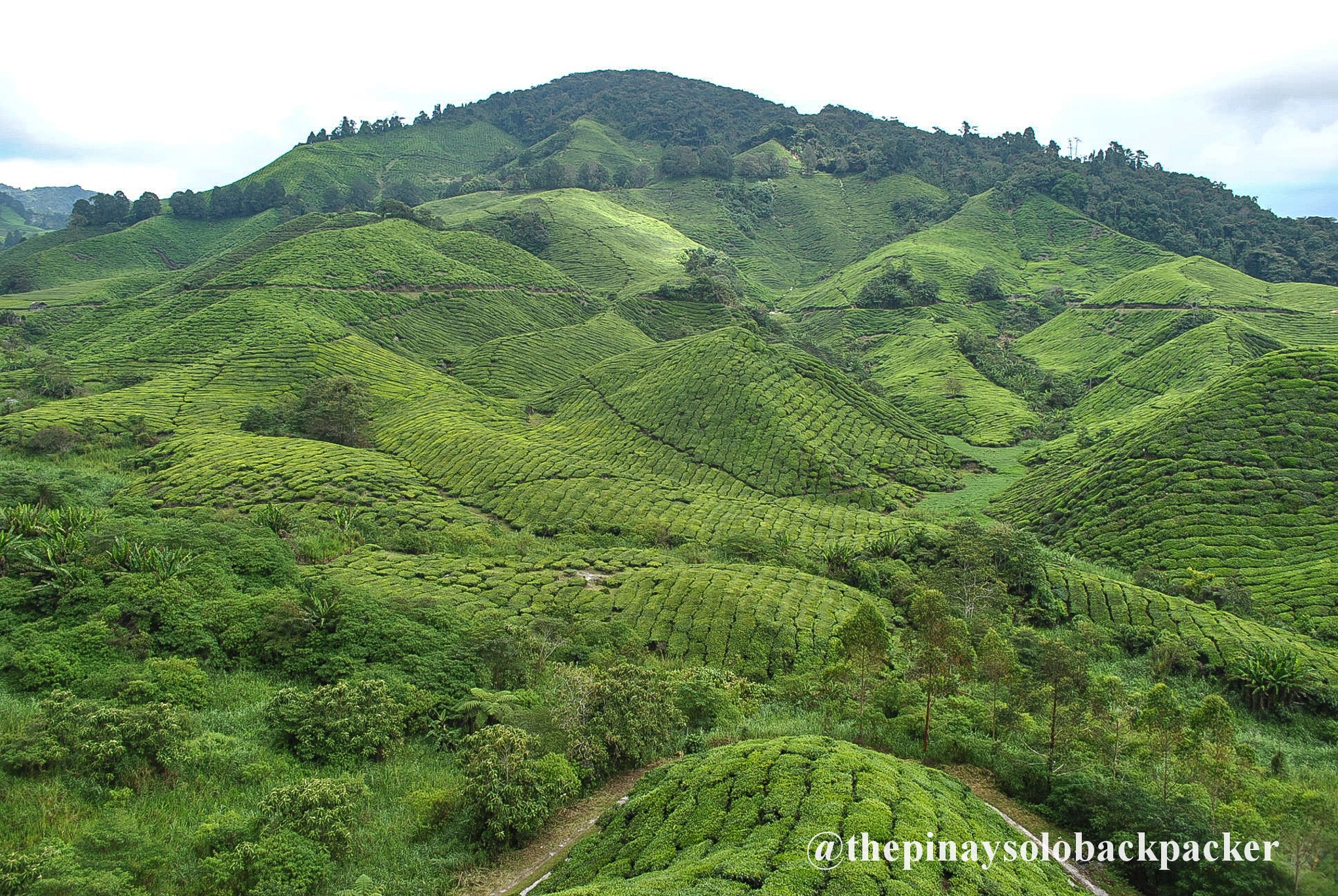 CAMERON HIGHLANDS TRAVEL GUIDE (Budget + Itinerary)