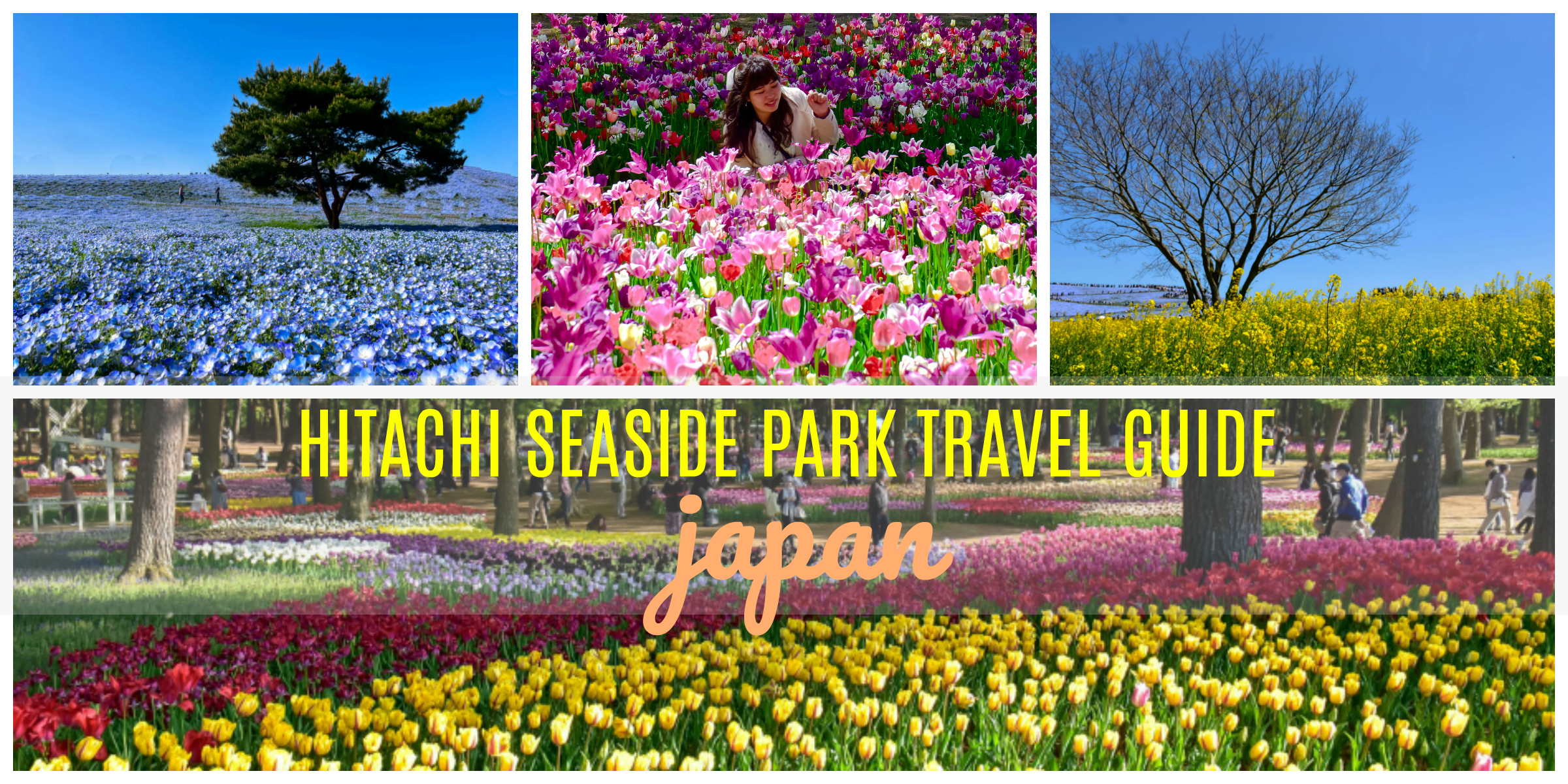 HITACHI SEASIDE PARK FROM TOKYO