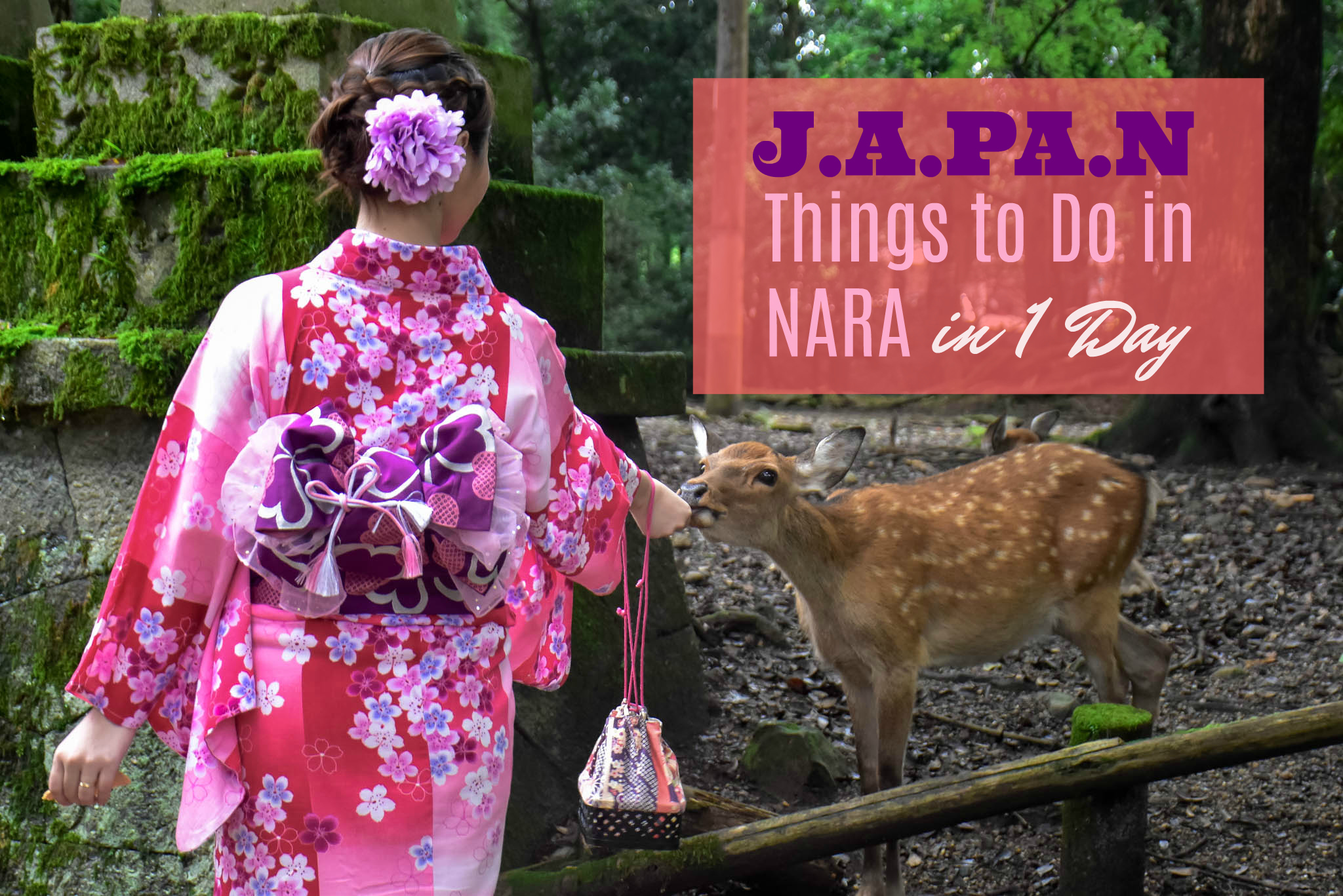 What to Do in Nara in 1 Day and How to Get There