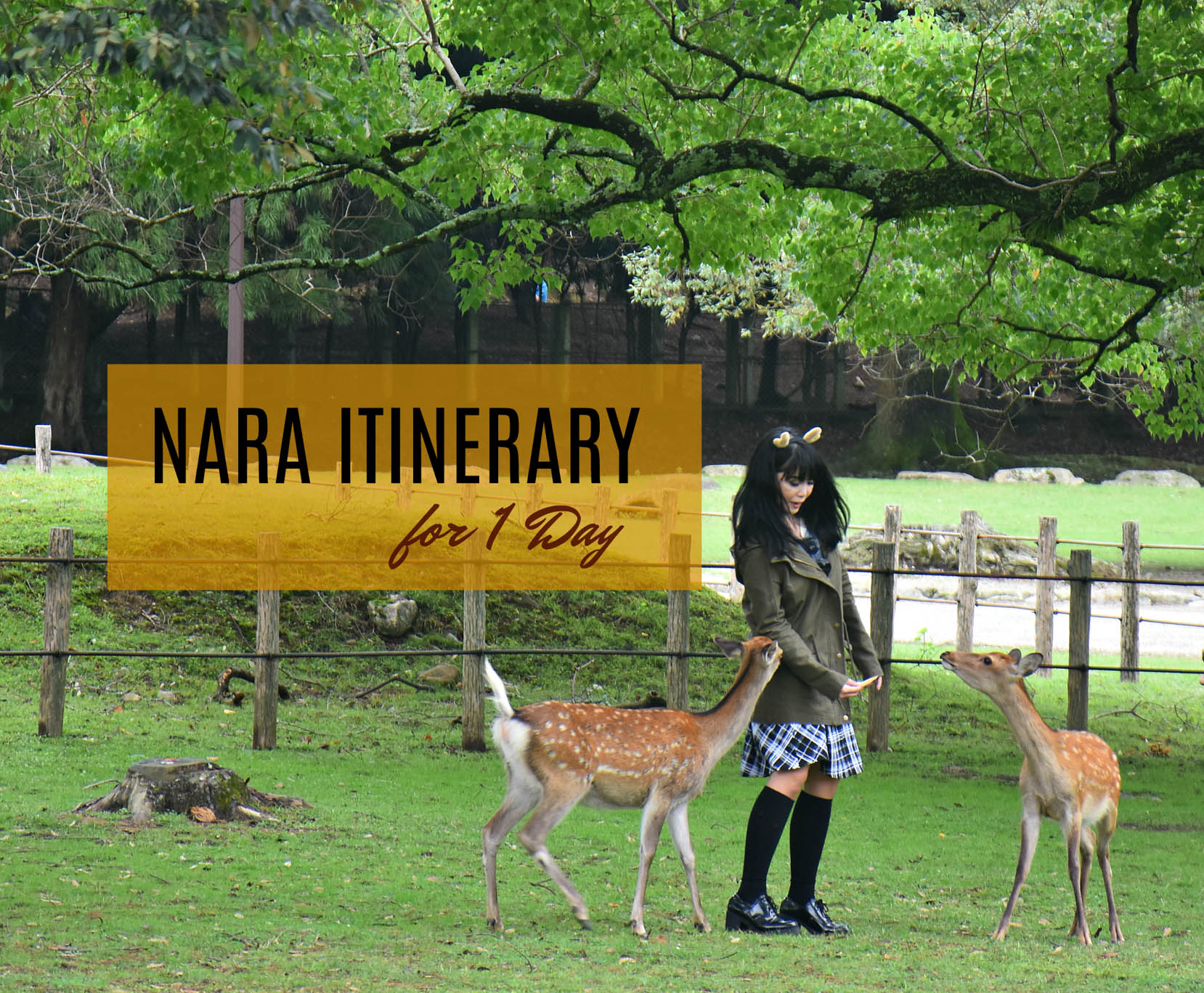 NARA ITINERARY: 1 DAY / DAY TRIP FROM OSAKA OR KYOTO