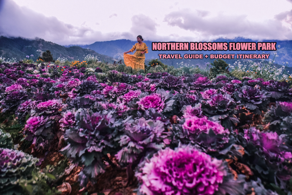 NORTHERN BLOSSOM FLOWER FARM in ATOK, BENGUET: DIY TRAVEL GUIDE (ITINERARY + BUDGET)